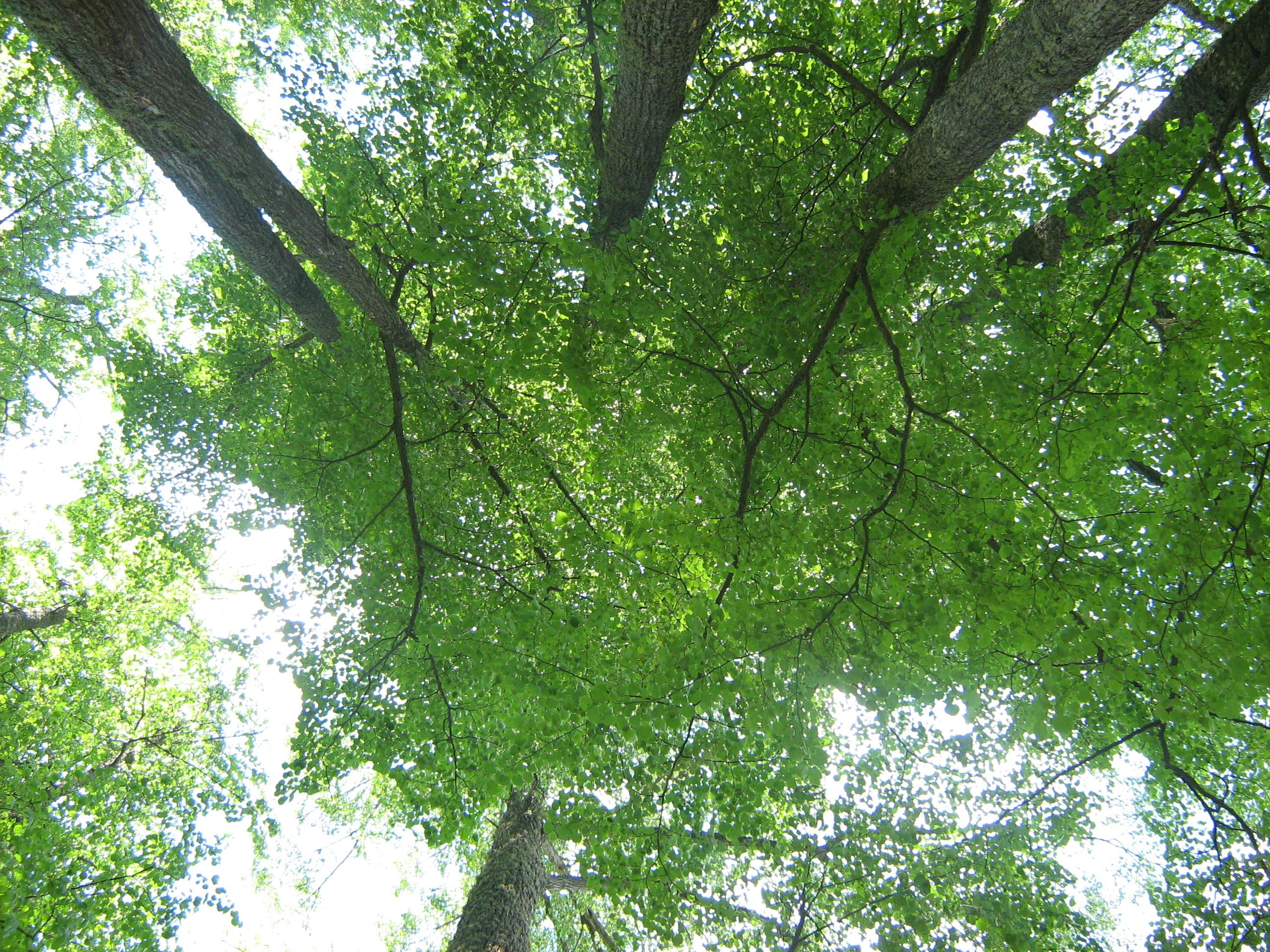Зелёный небосвод